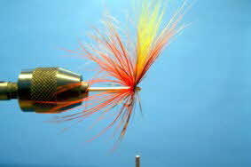 salmon spider four