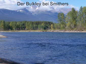 Bulkley River in Britisch Kolumbien Kanada bei Smithers hat Steelhead