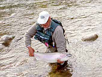 Copper Steelhead