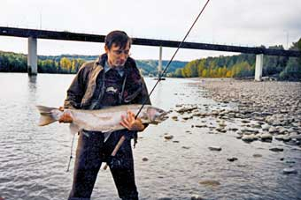 big skeena steelhead